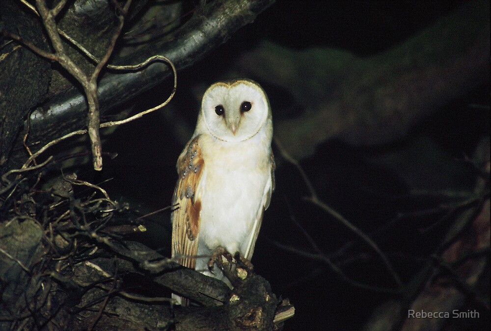 Barn Owl by Rebecca Smith