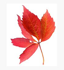 Canada, Leaf, Nature, Green Photographic Print