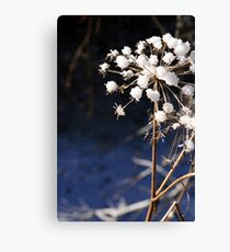 Ice Blossoms Canvas Print