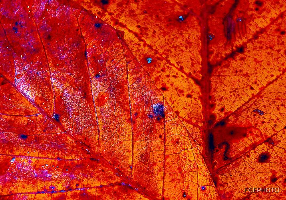 autumm red by FGEPHOTO