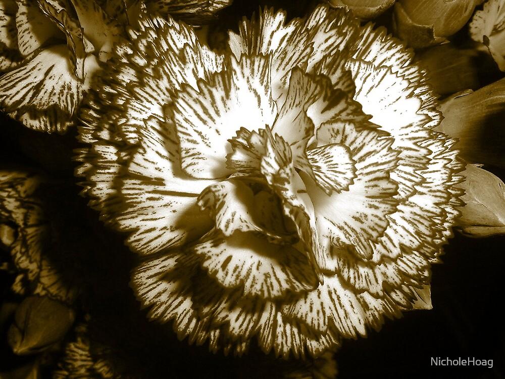 Carnations  by NicholeHoag