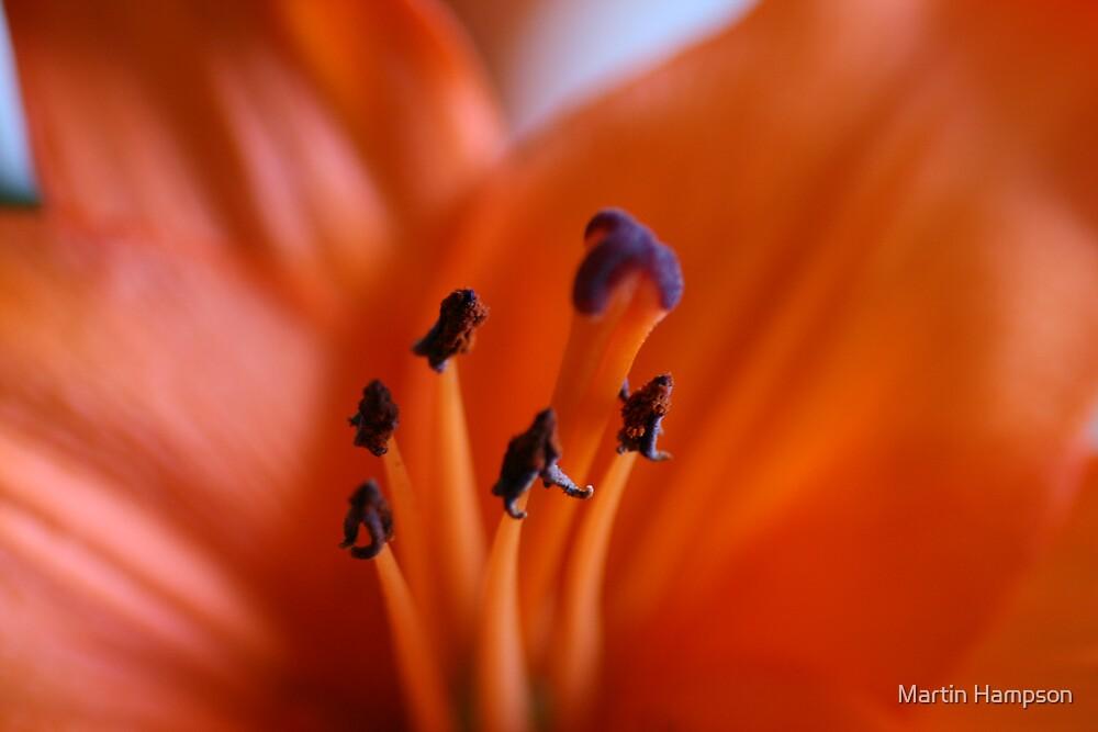 Orange Desire by Martin Hampson