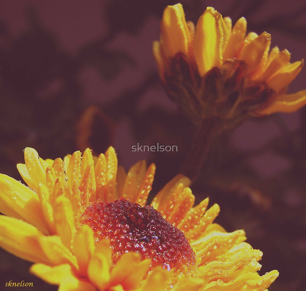 Looks Like Love to Me by sknelson
