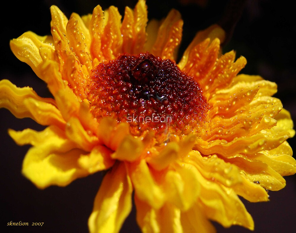 Yellow Ripples by sknelson