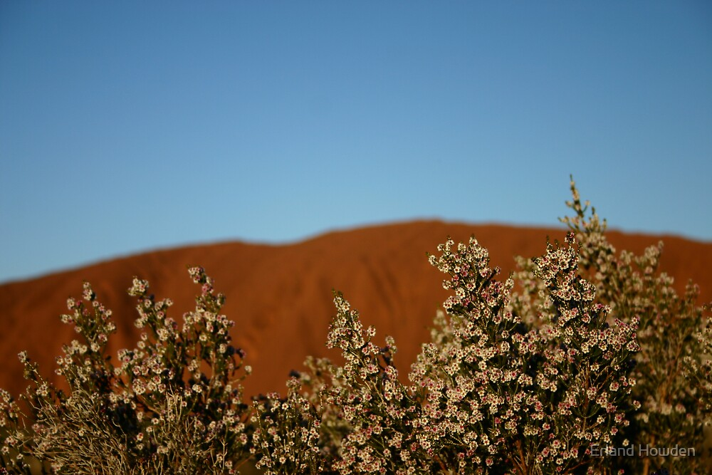 Uluru Wildflowers by Erland Howden