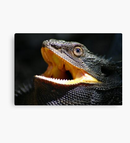 Eastern Bearded Dragon Canvas Print