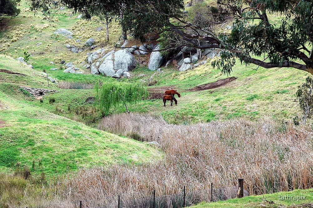 Tilba Valley by tathrapix