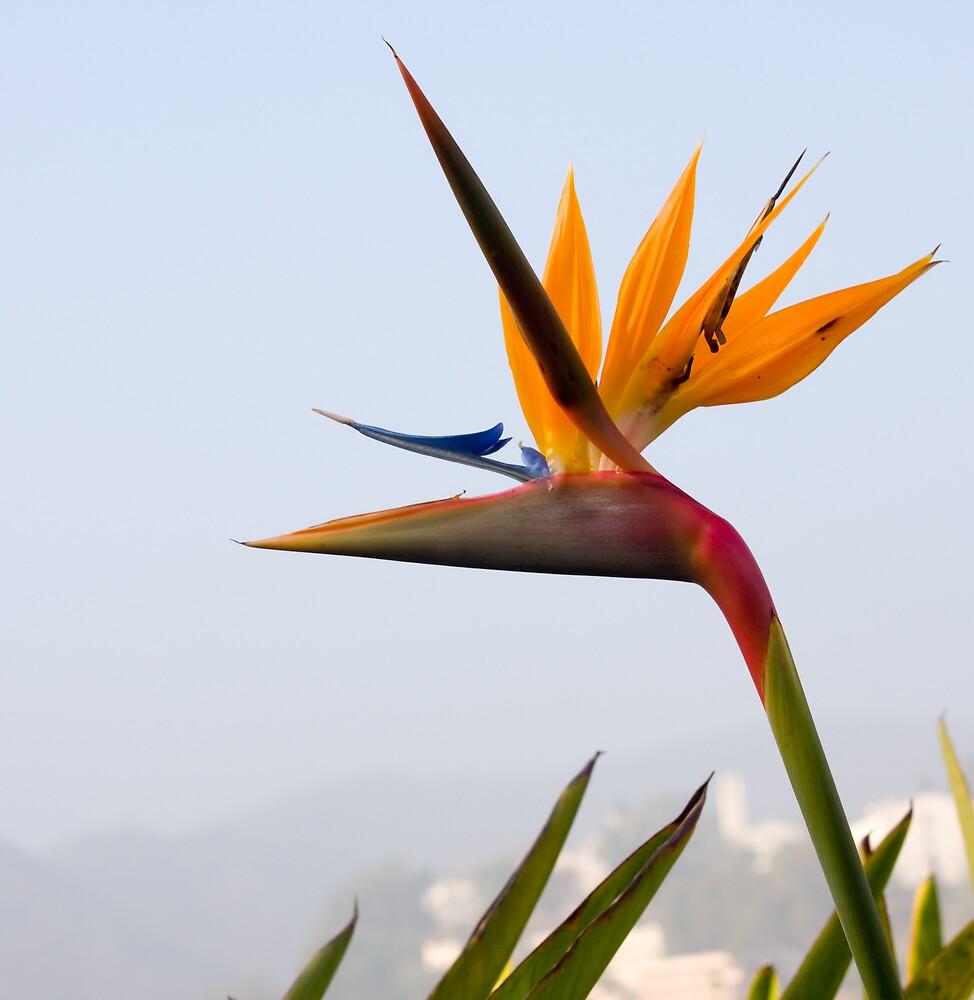 bird in paradise by Adam Mattel