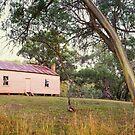 Long Plain Hut, Kosciuszko National Park, New South Wales, Australia by Michael Boniwell