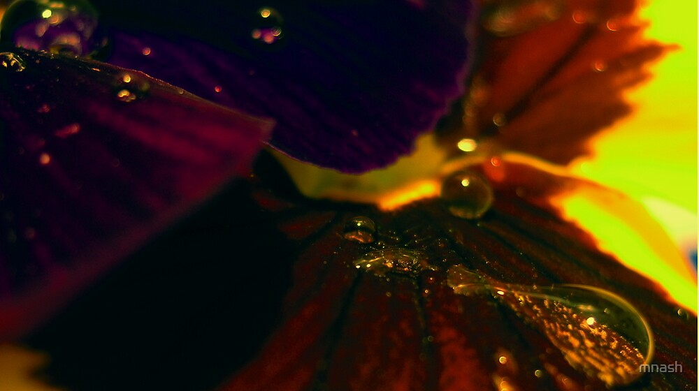 Flower droplets  by mnash
