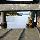 Looking under the stairs of the jetty by lifeinpixels
