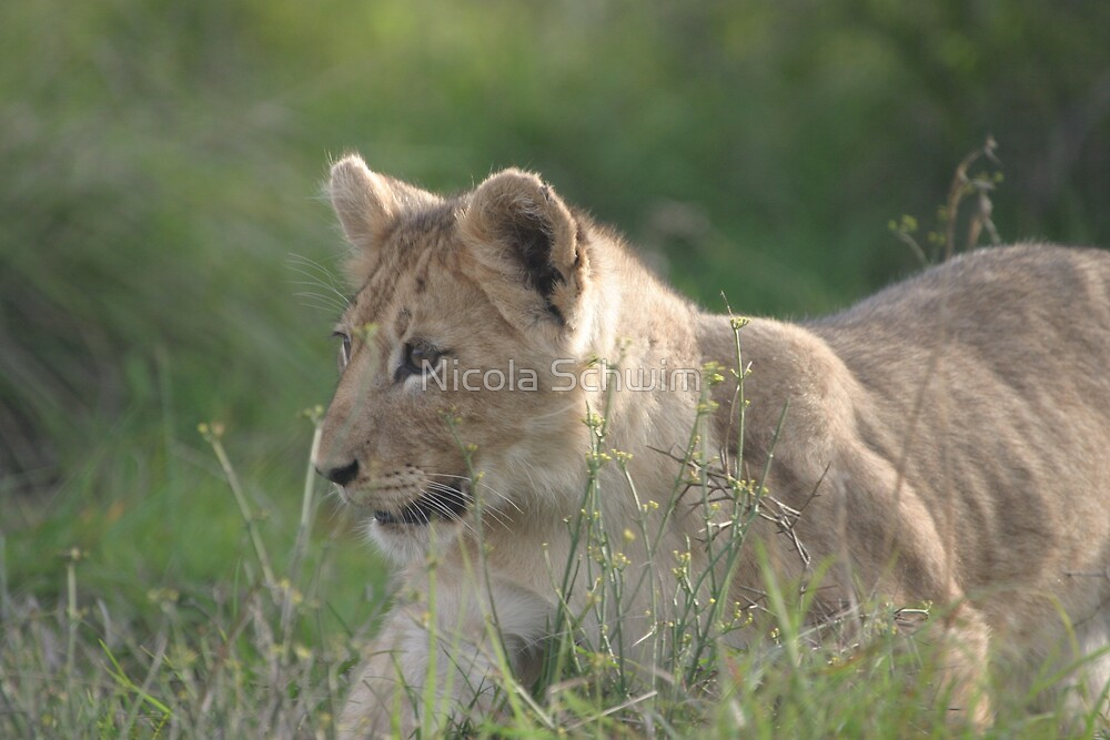 Stalk and Pounce! Its the big game now! by Nicola Schwim