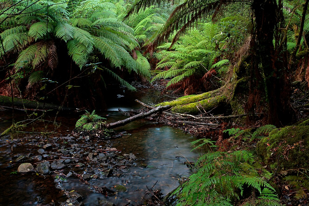 TASMANIAN CREEK- AUSTRALIA by taurus10