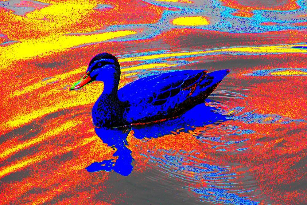 Duck - Dandenong Valley Metropolitan Park 2.jpg by Paul Kiesskalt