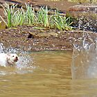 Splash! by Lesliebc