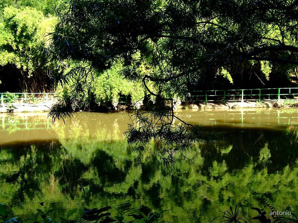 Reflections by antonio