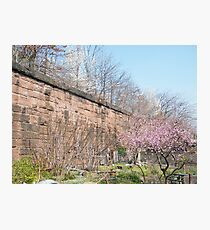 Harsimus Branch Embankment, Former Pennsylvania Railroad Embankment , Jersey City, New Jersey  Photographic Print