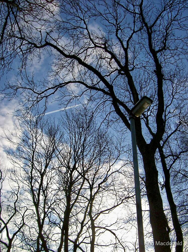 Trees by Ann Macdonald