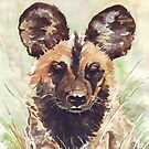 Afrika Wildehond (Lycaon pictus) by Maree Clarkson