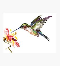Flying Hummingbird and Flower Photographic Print