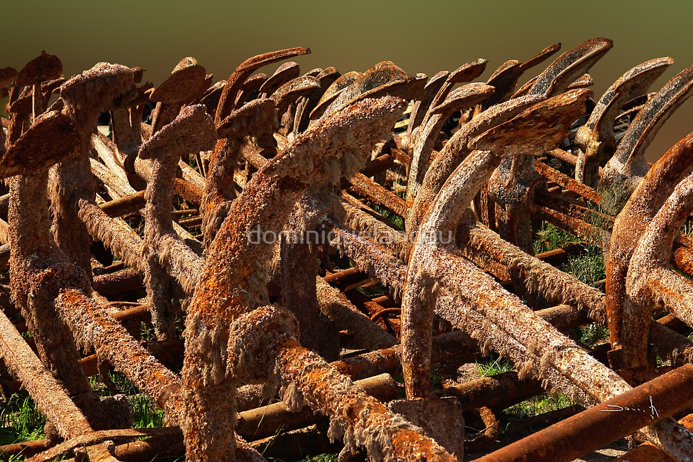 anchors by dominiquelandau