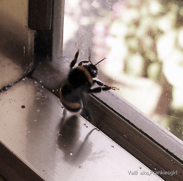 Buzz Off by Valli  aka Frankiesgirl