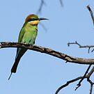 Rainbow Bee-eater by RochelleJean