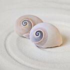 Shark's eye Shell Zen Still Life by artsandsoul