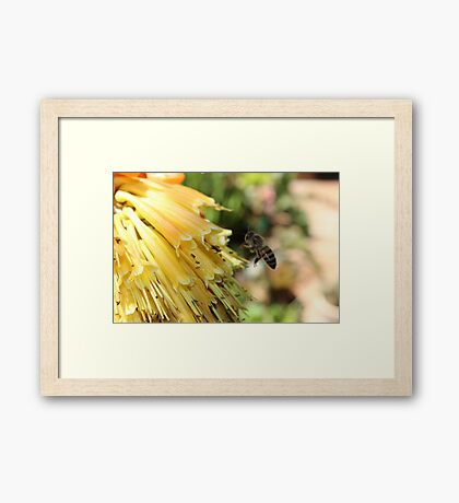 The Plight of our Honey Bees Framed Print