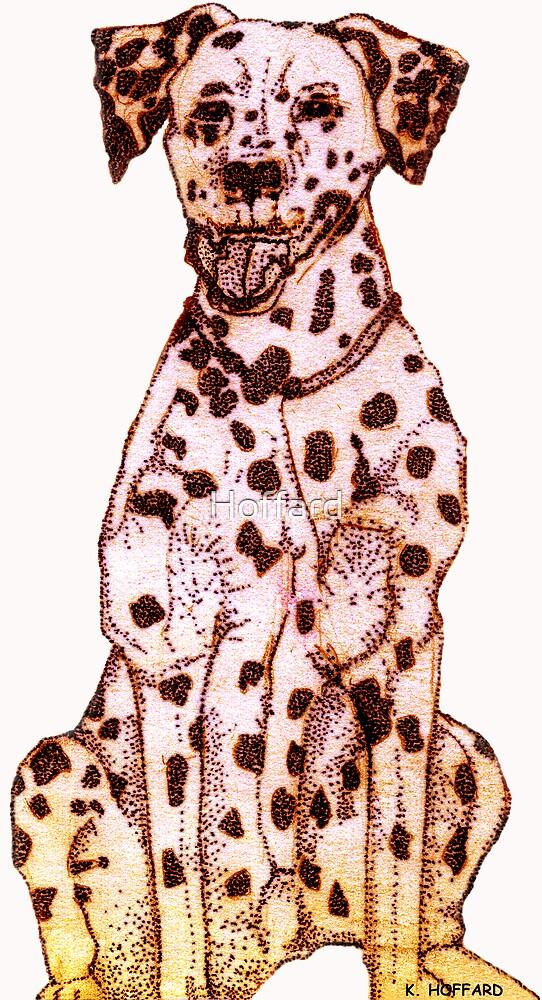Dalmatian by Hoffard