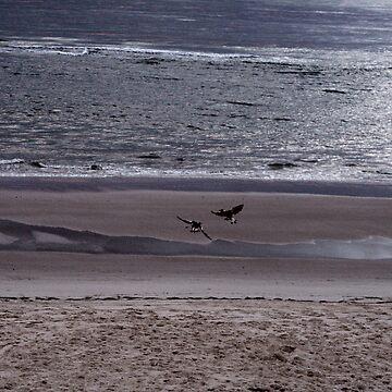 Fight in Flight by bribiedamo