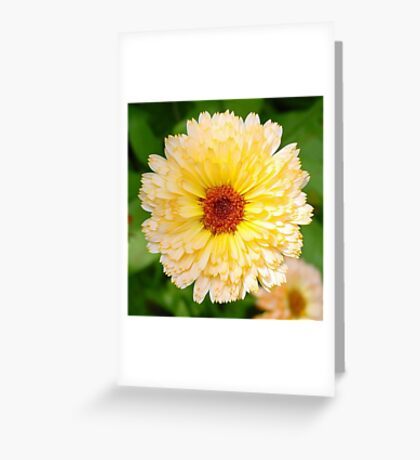Beautiful Yellow Marigold  Greeting Card