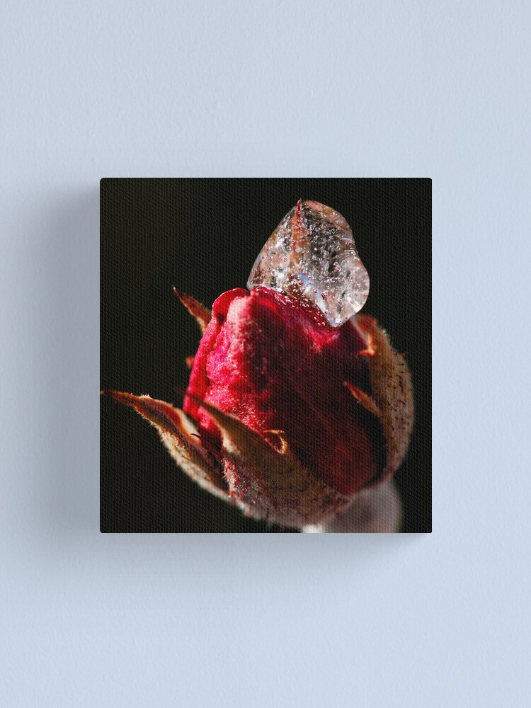 Alternate view of Rose Icing Canvas Print