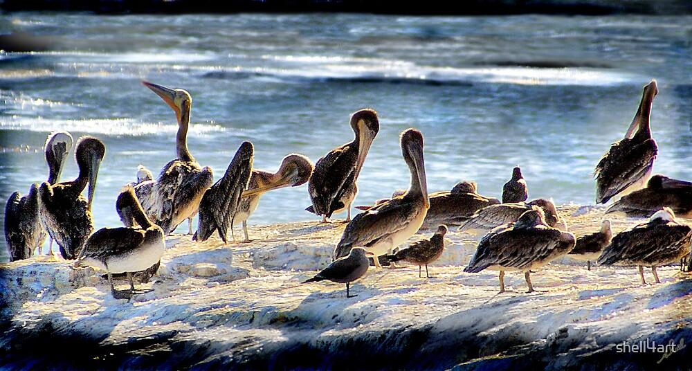 Pelicans by shell4art