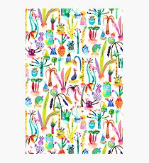 Lush and dreamy cacti garden Photographic Print