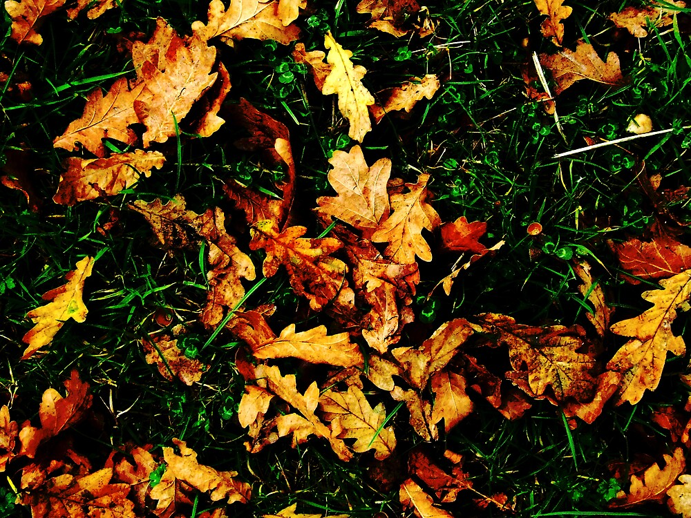 Autunm Leaves by Charlotte-Emily Edgell