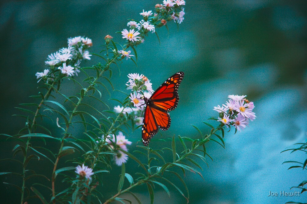 Butterfly by Joe Hewitt