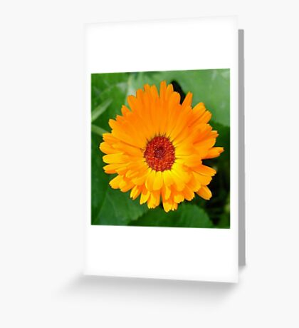 October's Summer Sunlit Marigold Greeting Card