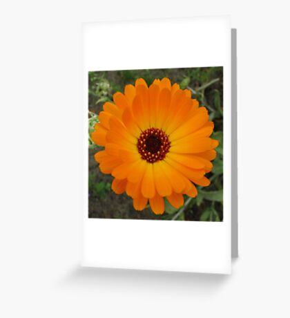Orange Husbandman's Dial Marigold Flower Greeting Card