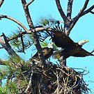 Eagle Series The Nest by Deborah  Benoit