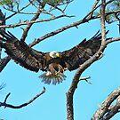 Eagle Series Wings by Deborah  Benoit