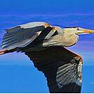 Blue Heron Series Fly by Deborah  Benoit