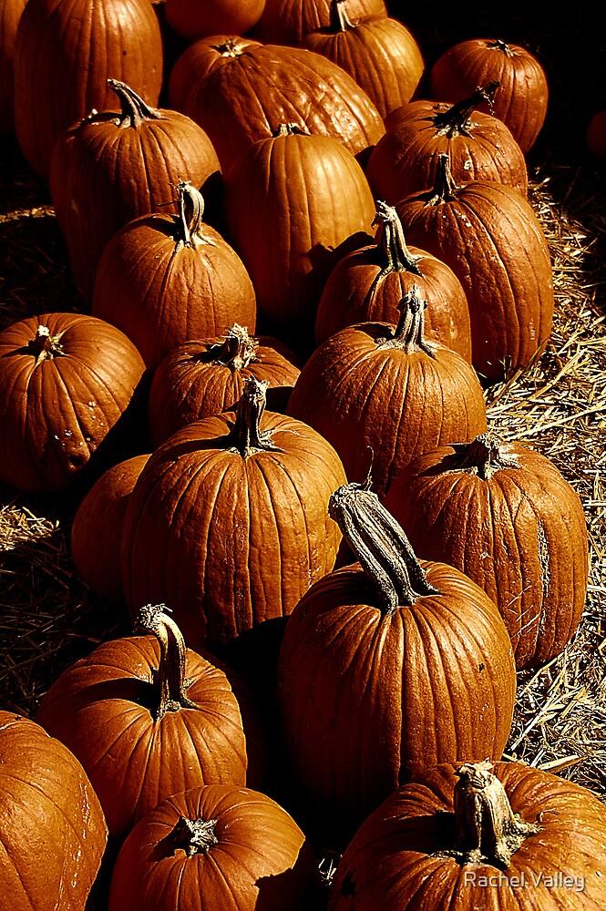 Pumpkins by Rachel Valley