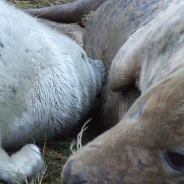 baby seal having its tea by barnsleysteve
