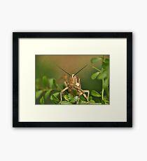 Grasshopper Tree Topper... Framed Print