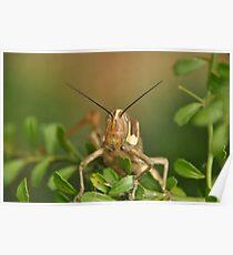 Grasshopper Tree Topper... Poster