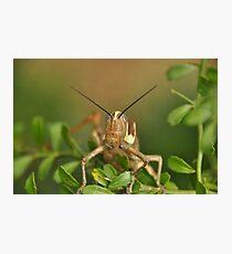 Grasshopper Tree Topper... Photographic Print