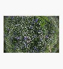 flower blanket Photographic Print
