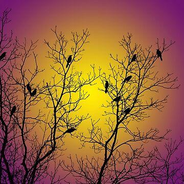 Silhouette Birds by rollosphotos