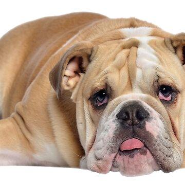 Boxer Puppy de storebycaste
